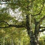 Tree Limb Cabling